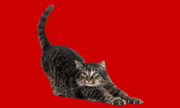 catfeatured