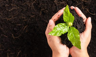 Why should we Compost?